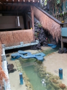 Water Feature - Clear Cafe
