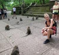 Monkey Magic - Monkey Forest