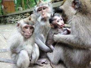 Famiy gathering - Monkey Forest