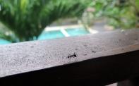 Groovy Ant