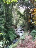 Lush river - Tampak Siring